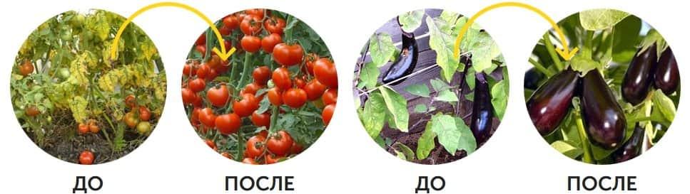 Как действует Agromax